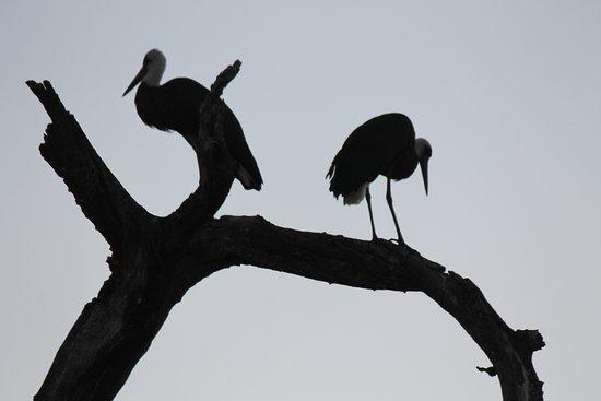 Pongola, Sudáfrica: safari drive
