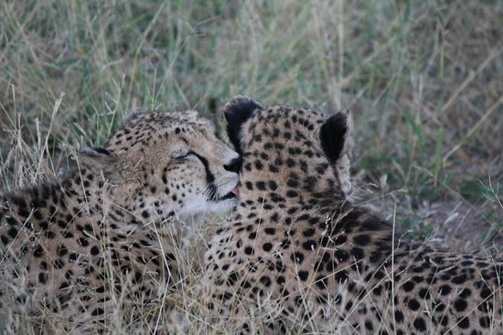 Pongola, جنوب أفريقيا: safari drive
