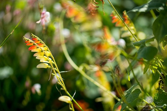 Potager Extraordinaire: plus de 1500 variétés de plantes exotiques, tropicales et potagères.