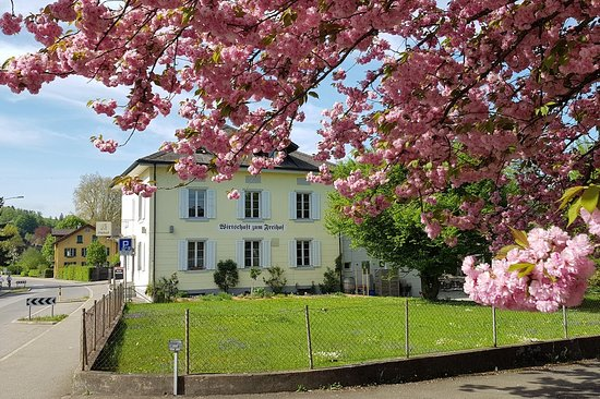 Frühling in Freihof Knonau