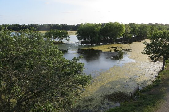View from tower. Brazos Bend State Park, Needville, Tx