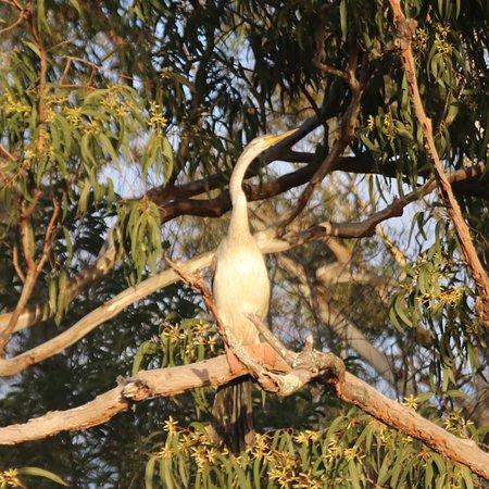 Tewantin, Avustralya: photo6.jpg