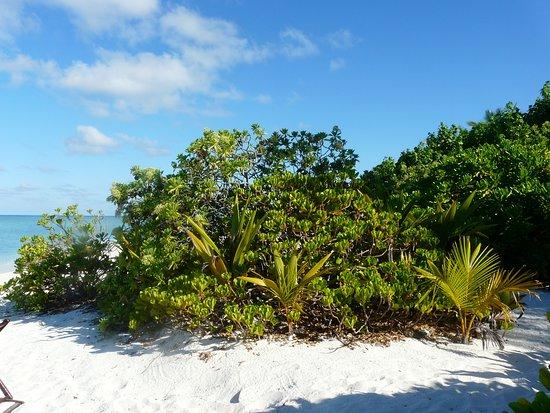Zdjęcie Makunudu Island