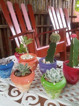Villa Haydee Chiroles: Colección de Cactus.