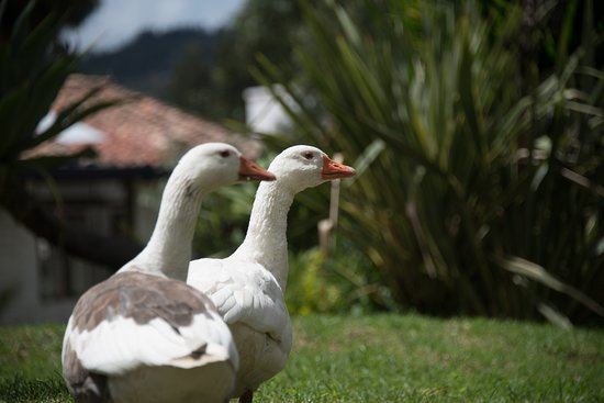 Finca San Pedro: Two of our lovely permanent guests!