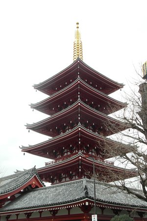 Half Day Sightseeing Tour in Tokyo: some great sights