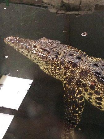 Brize Norton, UK: One of the many crocs/alligators.