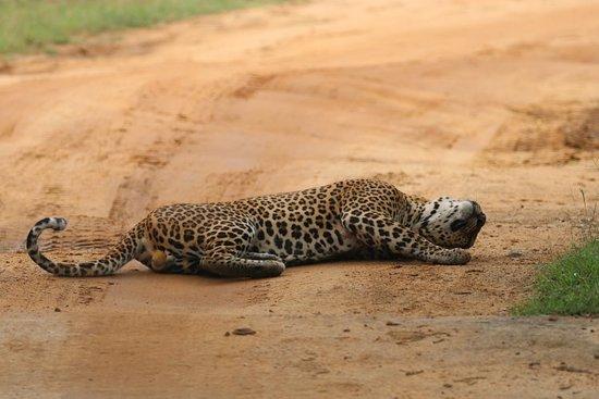 Yala Safaris - Private Tours ภาพถ่าย
