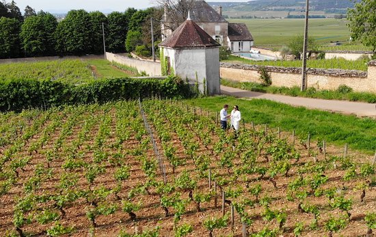 Beaune, Prancis: An unforgettable day exploring the Côte de Nuits.