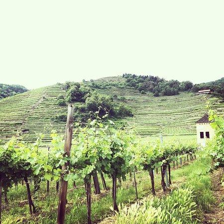 Zdjęcie Wachau Valley Wine Tasting Bike Tour from Vienna