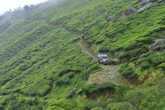 Suryanelli, India: A Jeep Safari challenging your adventurous within, through the tea estate. An experience to be h