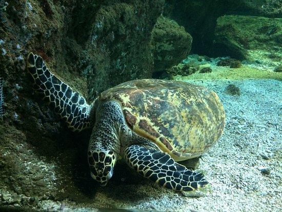 Aquarium La Rochelle: c'est une superbe tortue qui vous regarde droit dans les yeux et elle est très belle