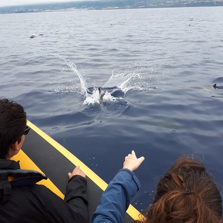Azores Whale Watching & Islet Boat Tour Φωτογραφία