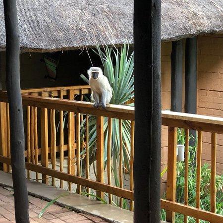 Bilde fra Entabeni Safari Conservancy