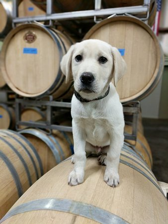 Solemn Cellars: Duck Dog the Winery Dog