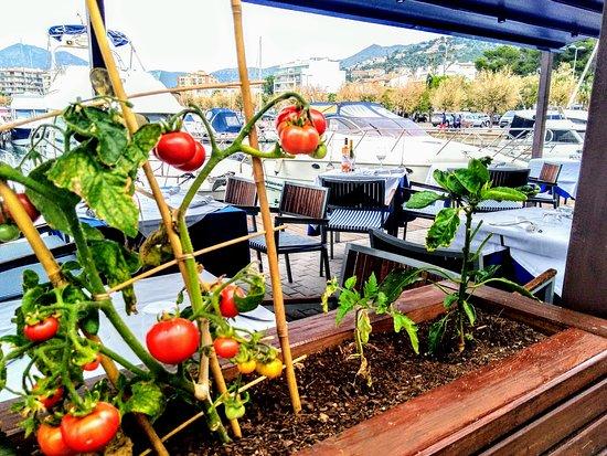 Restaurante Sodemar: Huerto del Sodemar