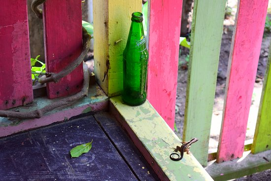 Omar's: Chill lizard that was next to us