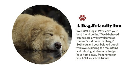 hammo s lodge restaurant a dog friendly inn we love dogs why