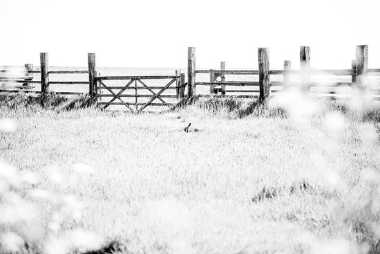 Orford Ness National Nature Reserve: One of the Hares just teasing us.
