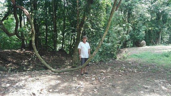 Guacimo, Costa Rica: Viajes y turismo costa rica 87116674 jherrera32196@gmail.com
