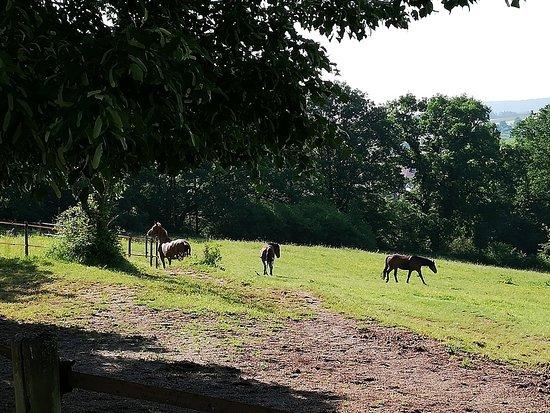 Heideck, Tyskland: Природная зона возле отеля