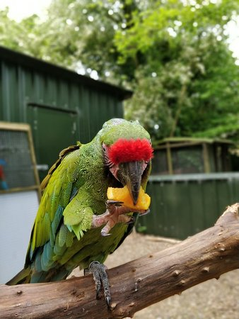 Tropical Birdland Photo