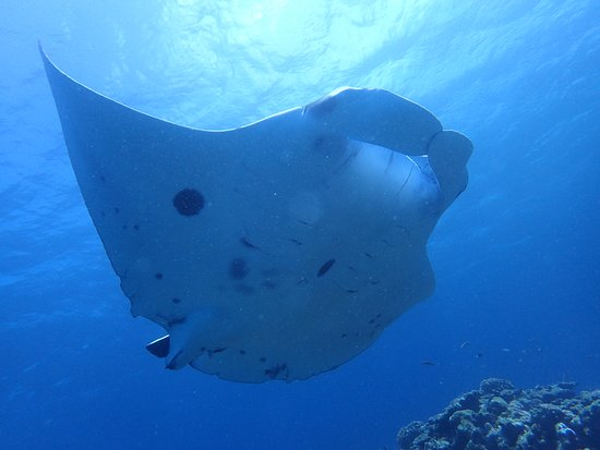 Jam Senang Divers