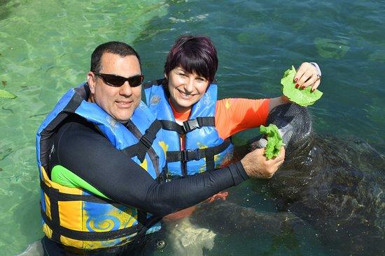 Puerto Aventuras, Meksika: Dolphin Discovery