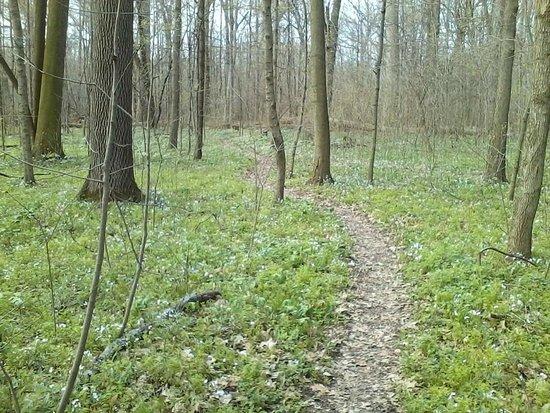 Baker Woods Nature Preserve