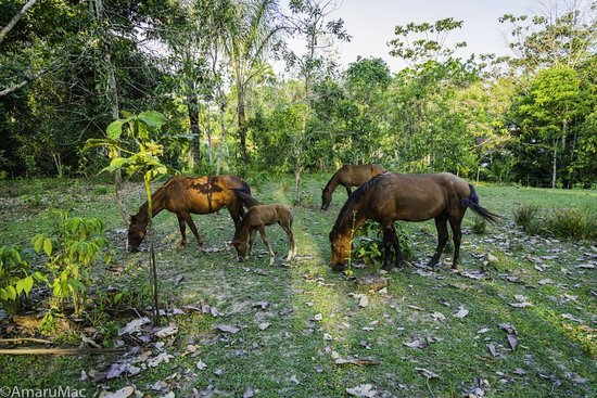 Rainforest Awareness Rescue Education Center: RAREC's horses