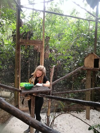 Rainforest Awareness Rescue Education Center: Volunteers feeding the primates