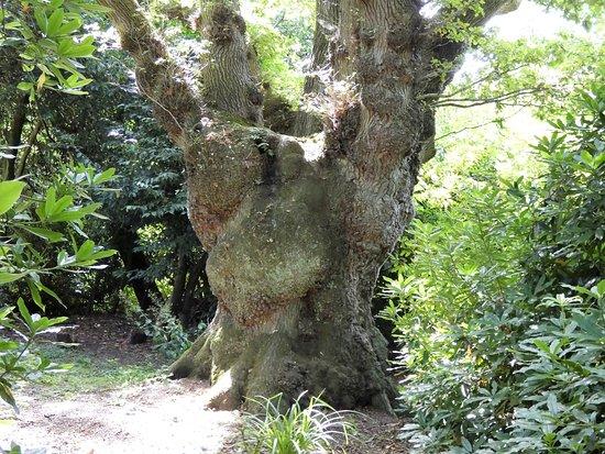 South Walsham, UK: Oaktree