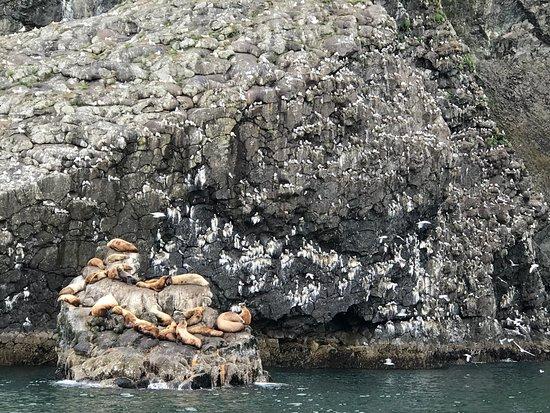 Kenai Fjords National Park Cruise from Seward: Endangered Stellar's Sea Lions