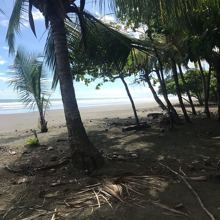 Playa Matapalo, Costa Rica : photo0.jpg