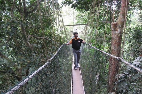 Full Day Taman Negara Tour with Batu...
