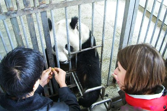 Private One Day Panda Volunteer Work...