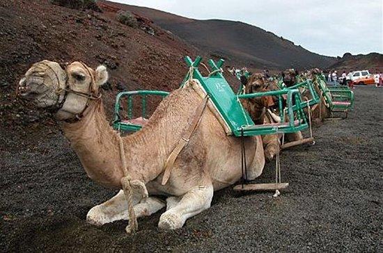 Paseo en camello en las dunas de...