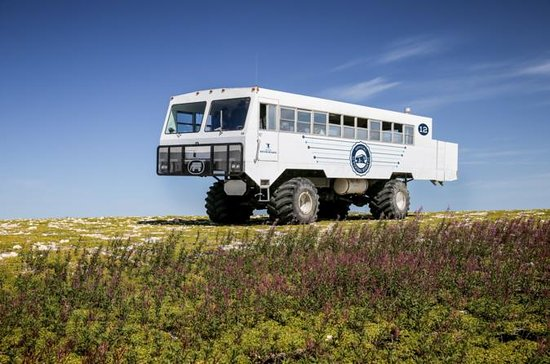 Tundra Buggy Summer Day Tours