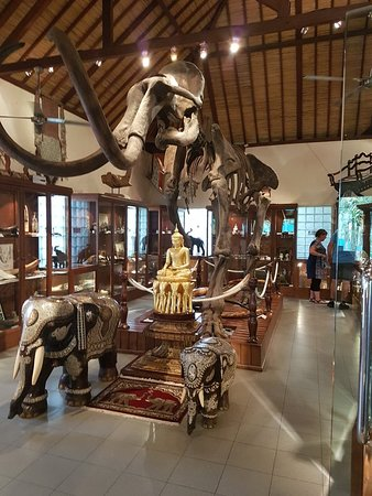 Elephant Safari Park: 20180525_150056_large.jpg
