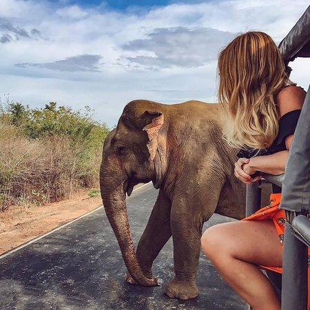 Sri Lanka LionTours