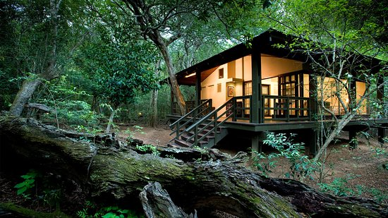 South African Safari - Phinda Forest Lodge - Review of