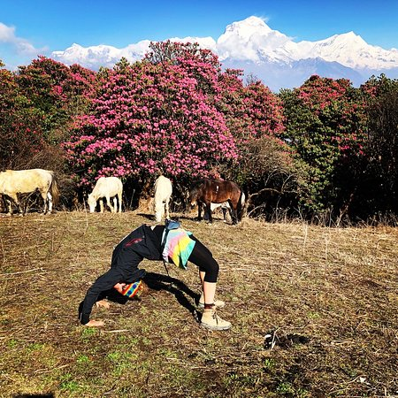 Bella's Magic Mountains: Rhododendron blossom
