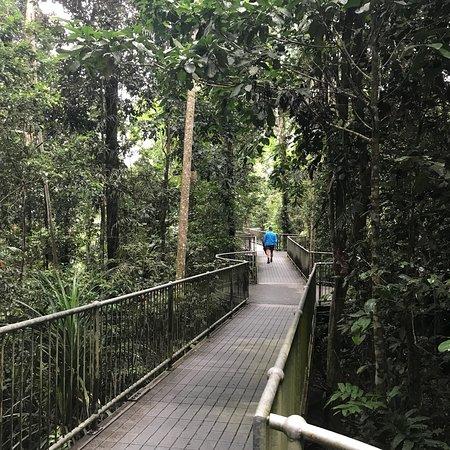 Mamu Tropical Skywalk Φωτογραφία