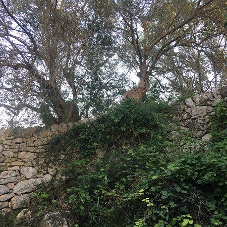 Bilde fra Ipogeo di Donnafugata