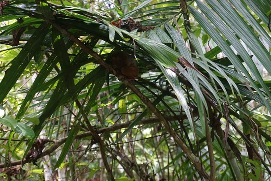Tarsier Conservation Area Φωτογραφία