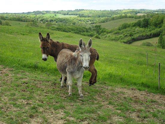 Lupiac, Francja: Nos ânes