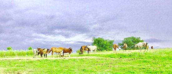 Ferme equestre de Lupiac