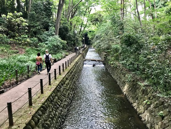 Private and personalized experience: see Tokyo with a local: Todoroki Ravine