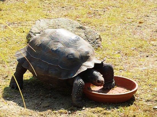 Jersey Zoo照片