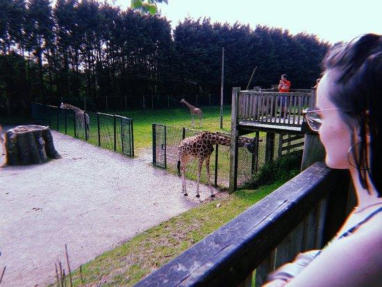 Blackpool Zoo Φωτογραφία